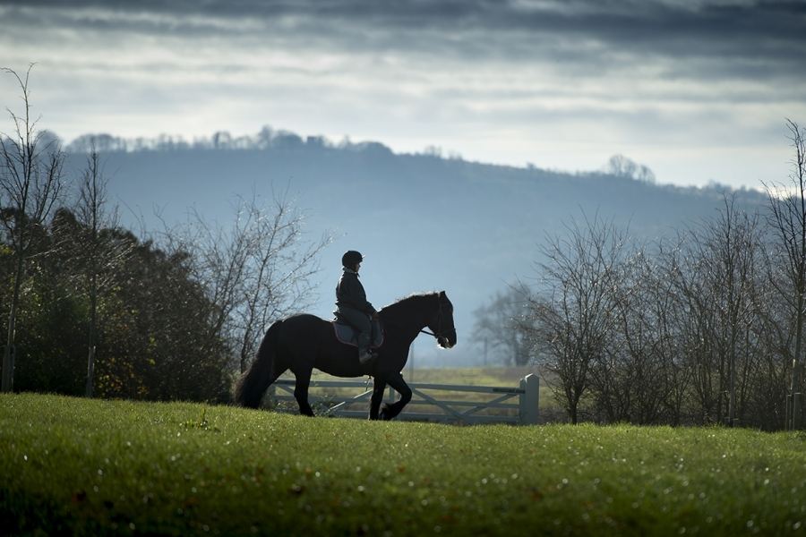 Enjoy peaceful hacks around our South Downs landscape