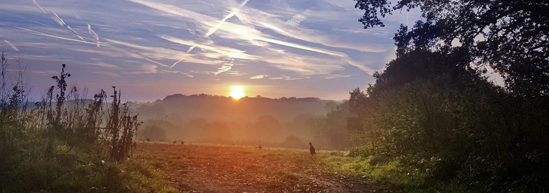 Hill Ash sunset